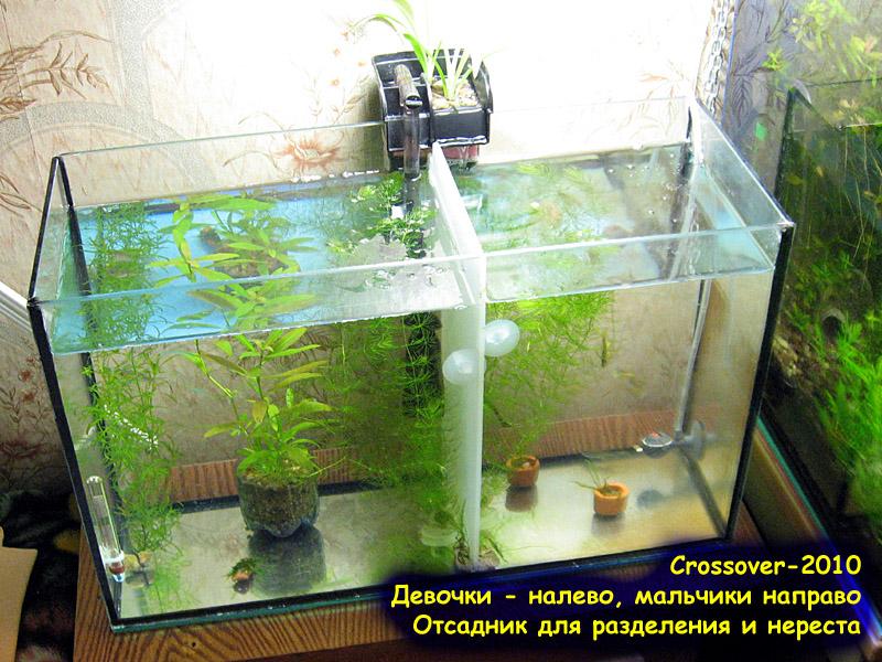 Как сделать отсадник для рыб - Лечение аквариумных рыб. Методы лечения